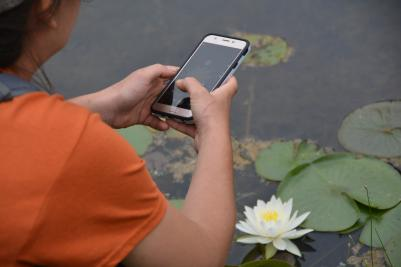 person taking smart phone photo of water lily