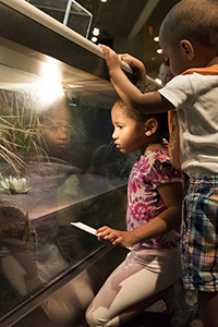 kids looking through glass